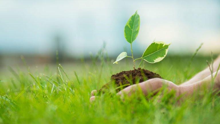 विश्व पर्यावरण दिवस ! 5 जून , जीवन के लिए पर्यावरण संरक्षण जरूरी